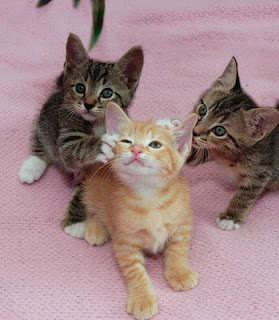 kucing comel6 Gelagat Si Comel