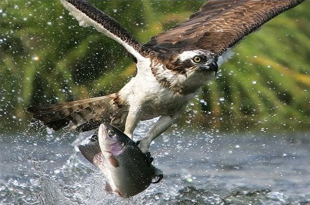 Perfect Timing HD Photography