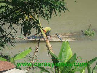 Nelayan Sungai Lukulo