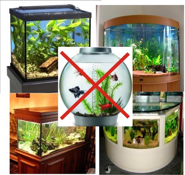 Akwapasja Akwarystyka Porady Ryby Rośliny Biotopy Sprzęt