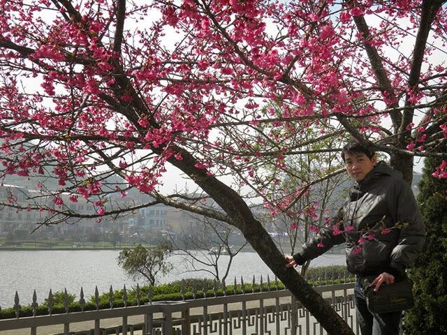Du lịch Tết 2015 lên Sa Pa ngắm hoa đào Nhật Bản