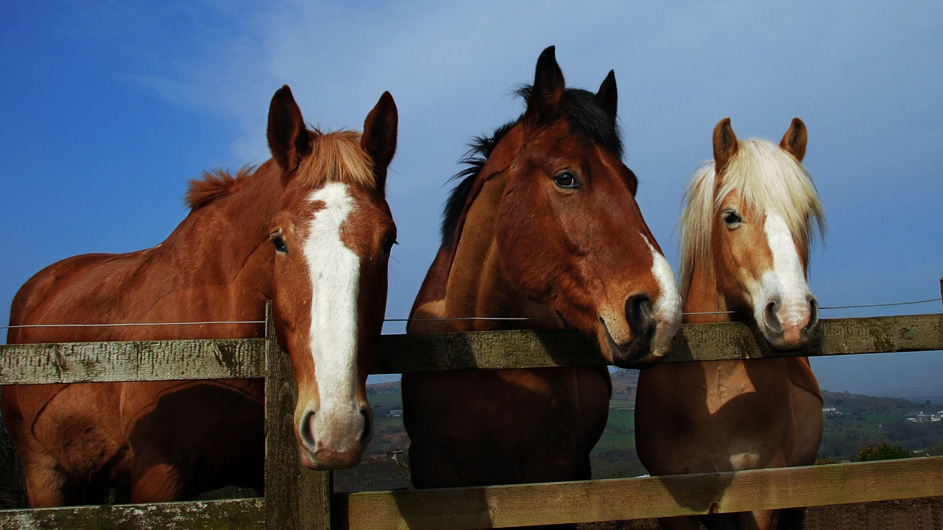 horse animal 2013 high resolution hd wallpapers free download 1080p