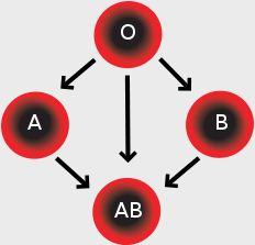 Siklus golongan darah, golongan darah