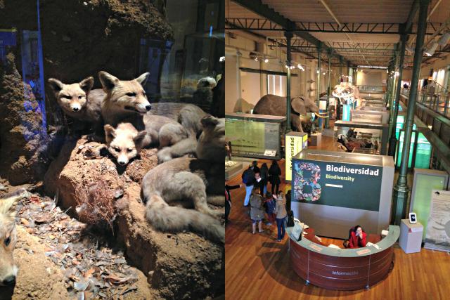 Ausstellung im Naturkundemuseum Madrid