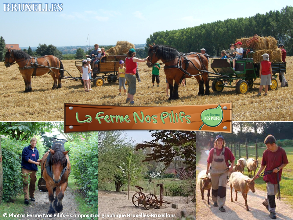 Ferme Nos Pilifs - Une ferme bruxelloise sur 5 hectares...mais bien plus encore ! - Un havre de paix aux portes de la ville - Bruxelles-Bruxellons