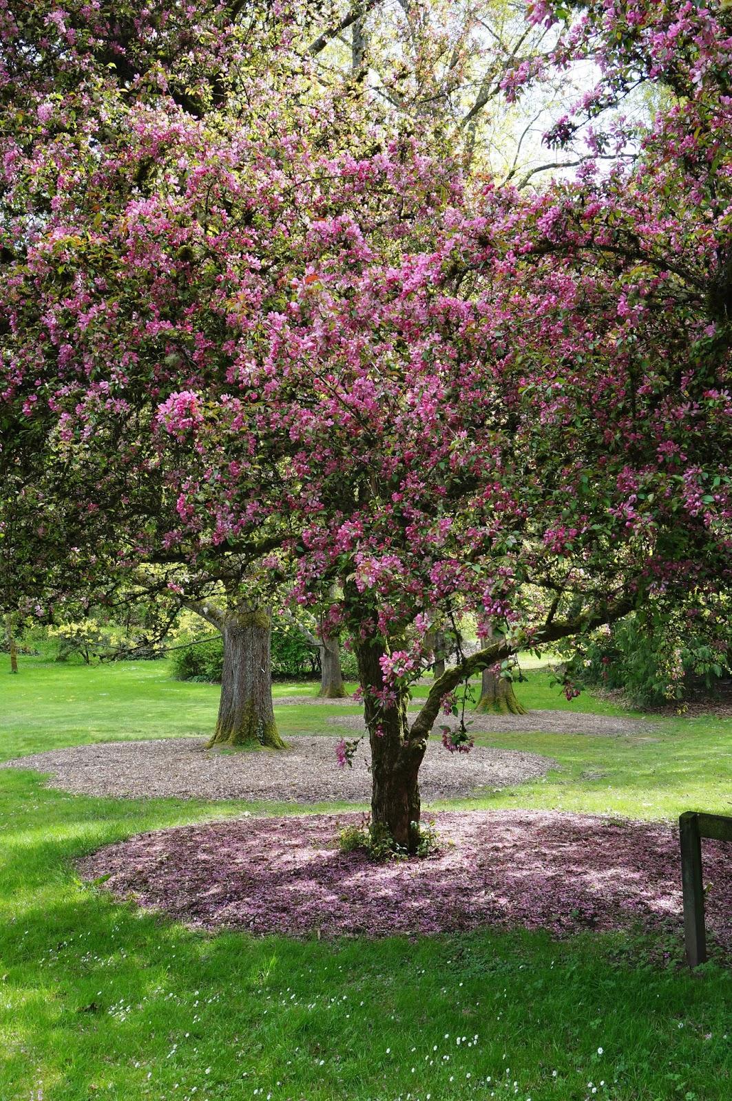 Moments of Delight...Anne Reeves: Seattle: Washington Park Arboretum ...