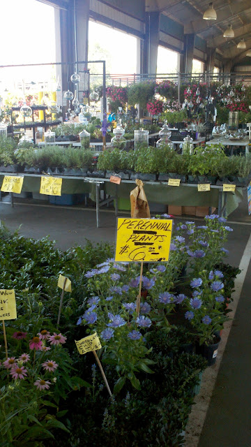 Plantings, planter pavilion, NC, Raleigh, farmers market, taken by Lynn Shallue at Lost Compass