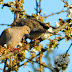 Mourning Dove~~~~~~~~~Wild Bird Wednesday