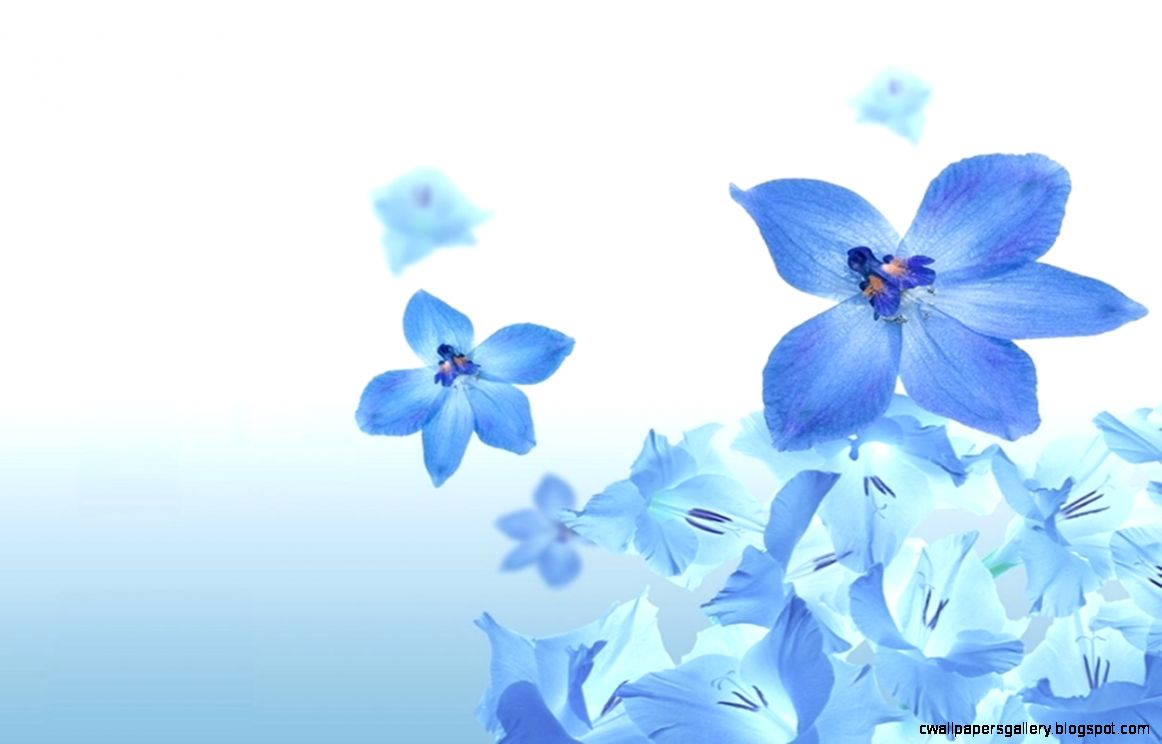 Background Flowers Blue   The Best Flowers Ideas