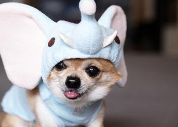 Puppy Wuv