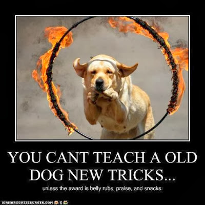 What age do you teach a dog tricks? | Yahoo Answers