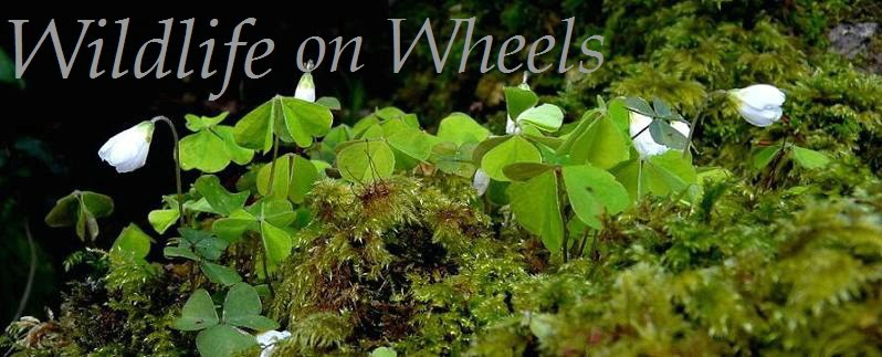Wildlife on Wheels