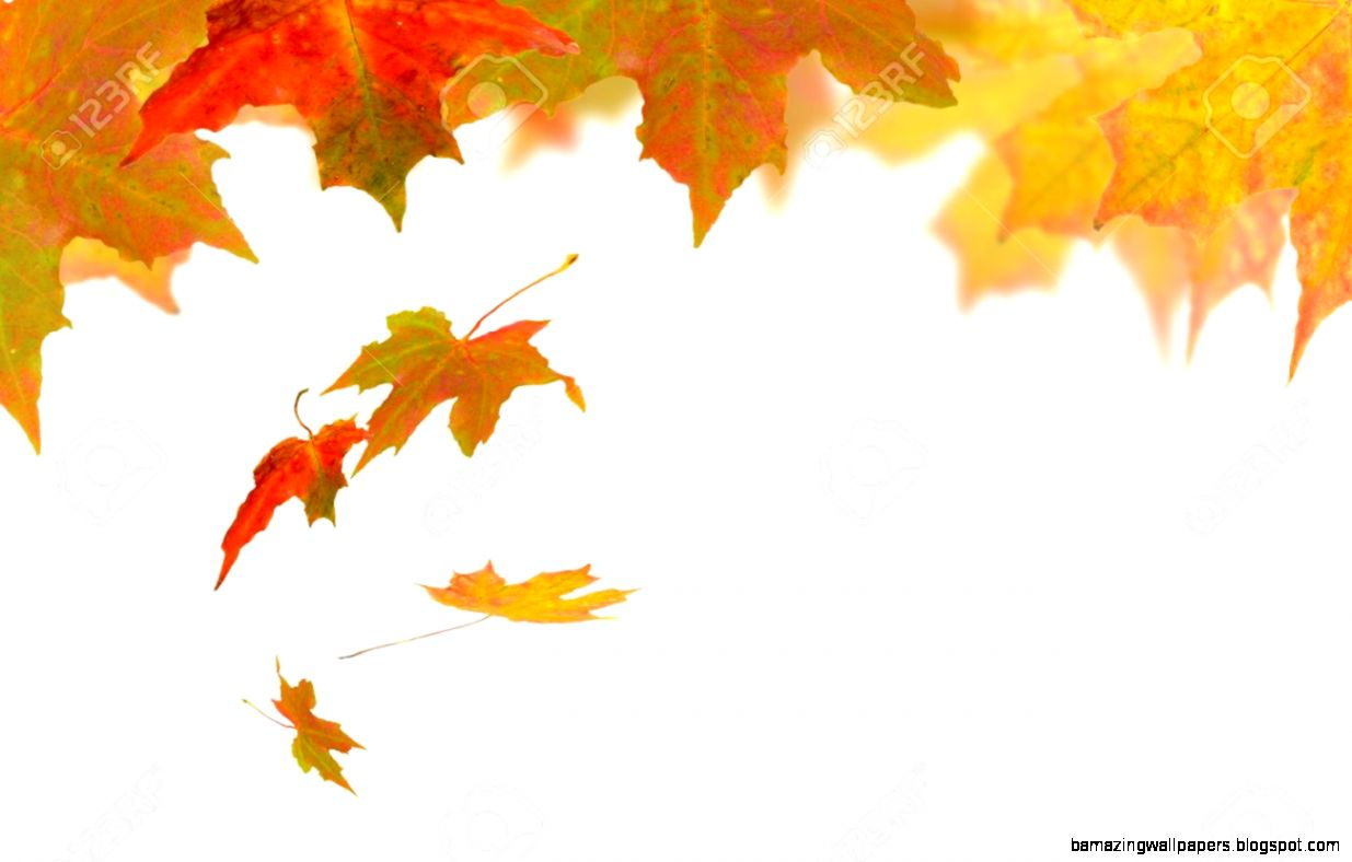 Autumn Leaves Falling On A White Background Stock Photo Picture