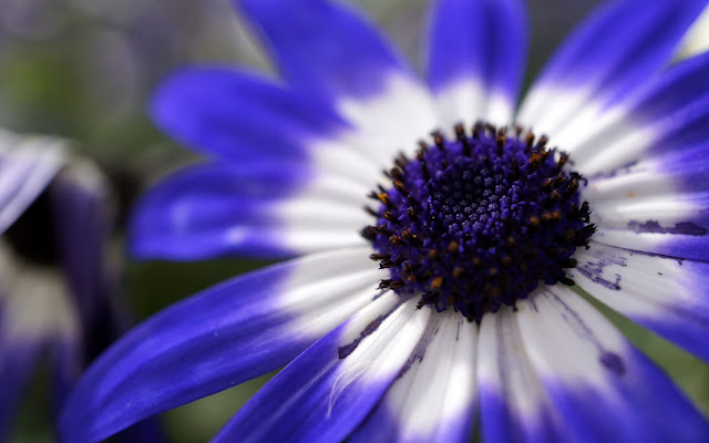 free micro photography image download flower