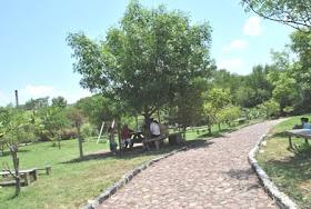 EL SABINAL EN SALVATIERRA