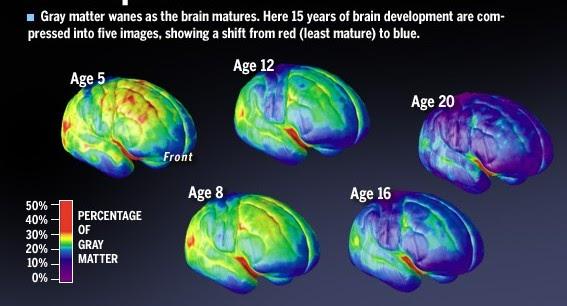 Desarrollo Neuropsicológico en El Adolescente 14-18
