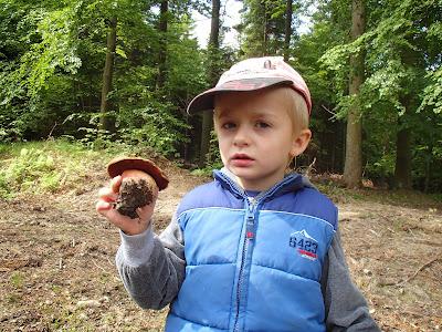 Las Bronaczowa, majowe grzyby, borowik ceglastopory, Boletus luridiformis
