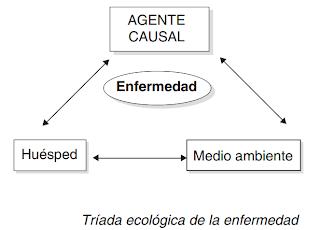 teoria, triada, ecologica,e enfermedad