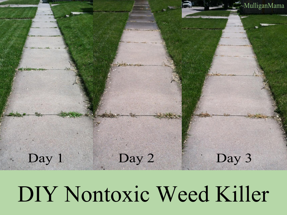 DIY Nontoxic Weed Killer