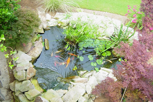pond backyard pond fish backyard pond ideas backyard garden pond