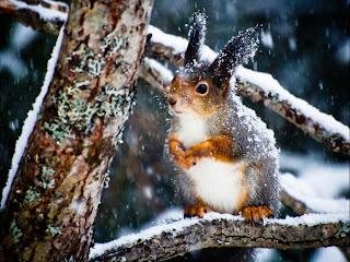 Ardillas en arbol con nieve