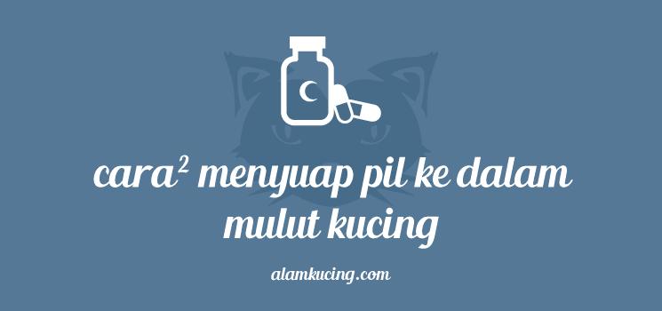 Cara-cara menyuap pil ke mulut kucing.