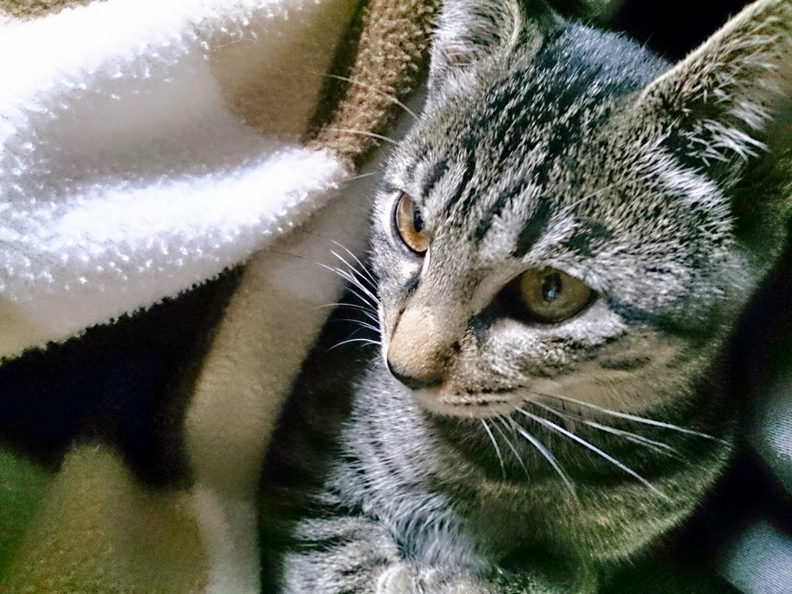 こたつと猫