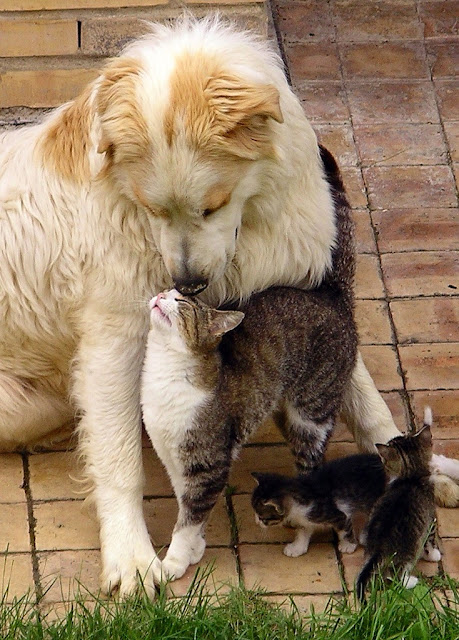 A Cat and Dog Love pictures