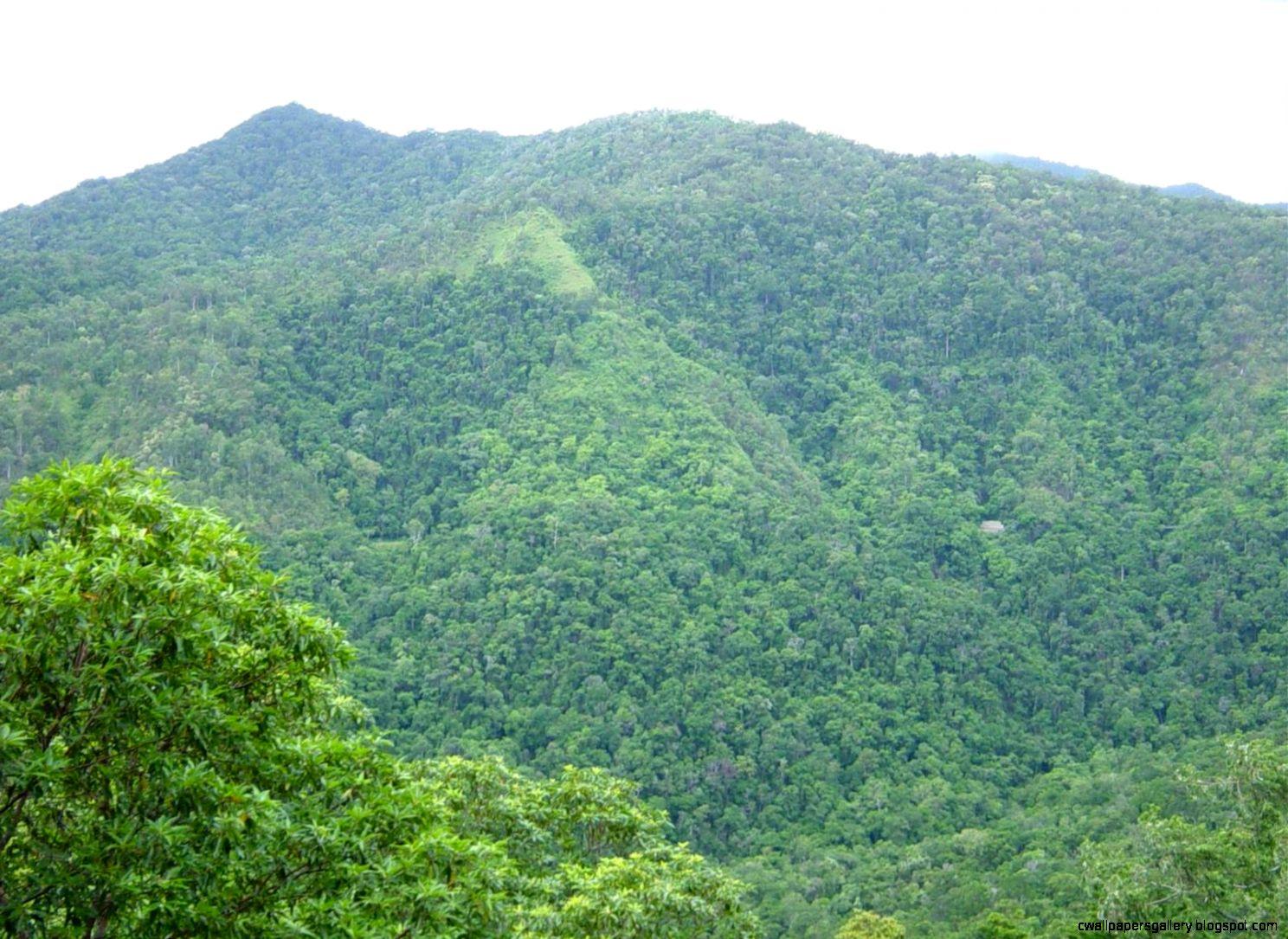 Rainforest   Wikipedia the free encyclopedia