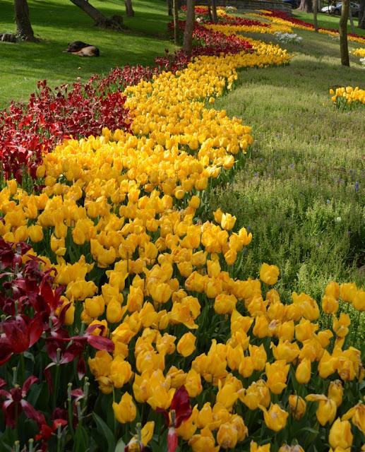 Yildiz Park Istanbul Tulips