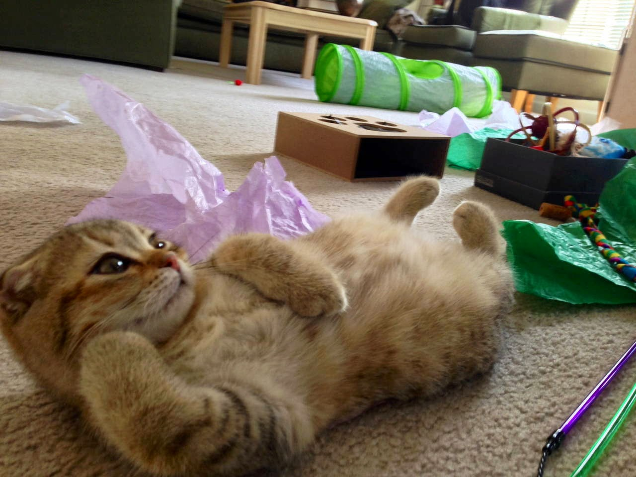 Funny cats - part 94 (40 pics + 10 gifs), cat pictures, draw me like one of your french girls