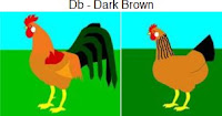 Db-darkbrown.jpg