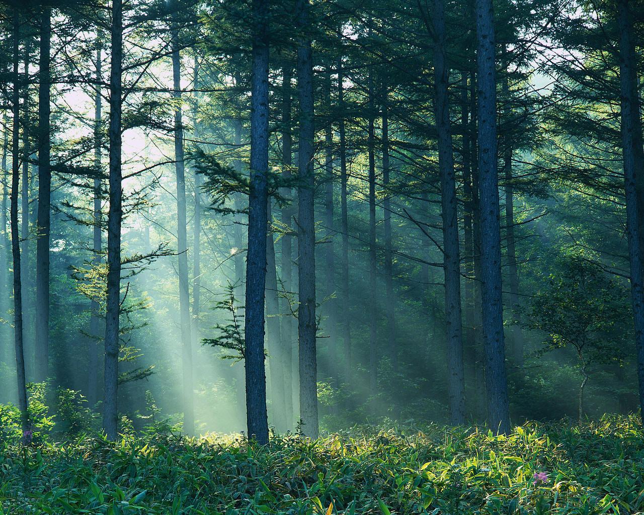 Best Wallpaper High Resolution Forest - forest%2Bwallpaper%2B02  HD_491117.jpg