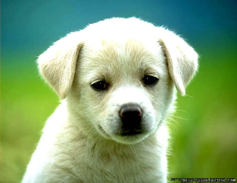 Download Dogs Baby U Cute Puppy Dog S Photo Wallpaper  Full HD