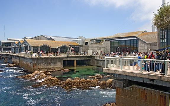 Zengari Travel Journal Zengari At The Monterey Bay Aquarium
