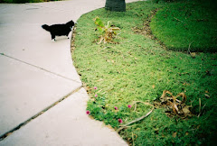 Cat In Mexico
