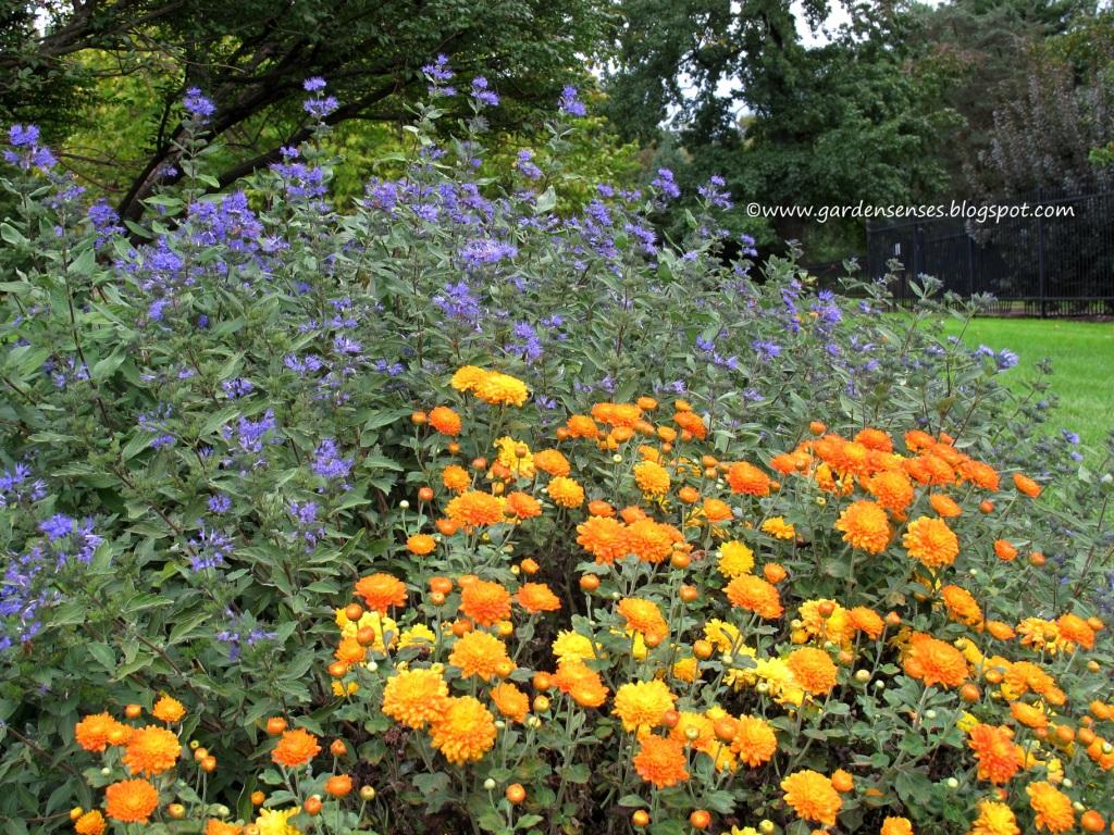 Garden Sense Fall Flowers
