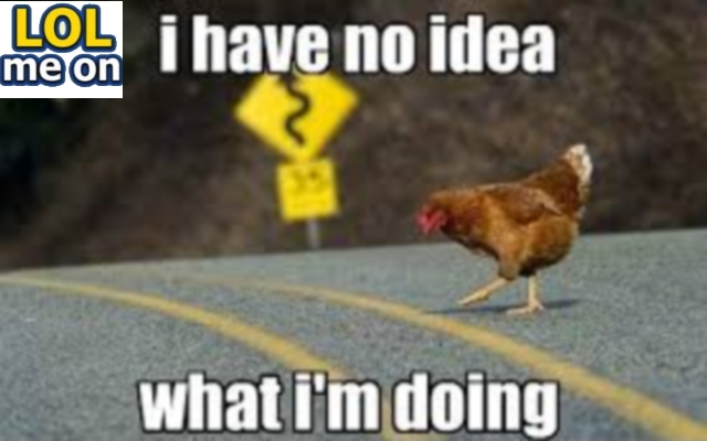 I Have No Idea What I'm Doing here - Funny Picture With Caption Funny pictures