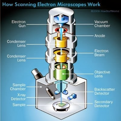 THE ELECTRON MICROSCOPE!