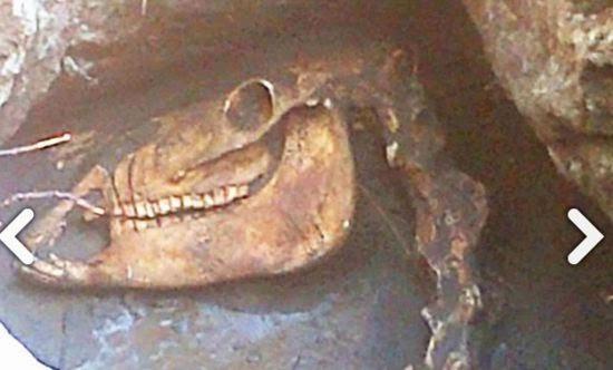 ini Dia Fot Fosil Dinosaurus di Bantul