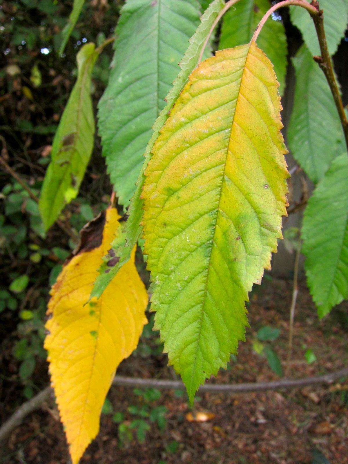 Chronica Domus: Autumn...