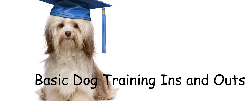 Basic Dog Training Ins and Outs