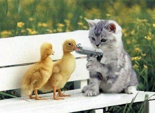 cat shooting ducks
