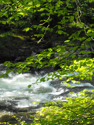 rushing river with trees close by