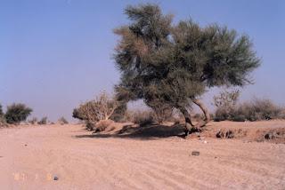 Pohon Gharqad; antara Keadaan Yahudi dan Sabda Rasulullah