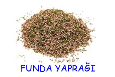 funda yağrağı