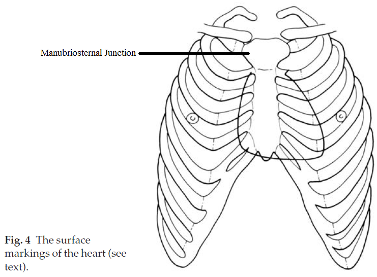 surface marking of lung