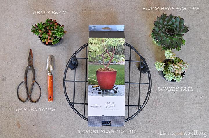 Succulent Garden DIY