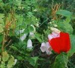 (M)ein wilder Garten