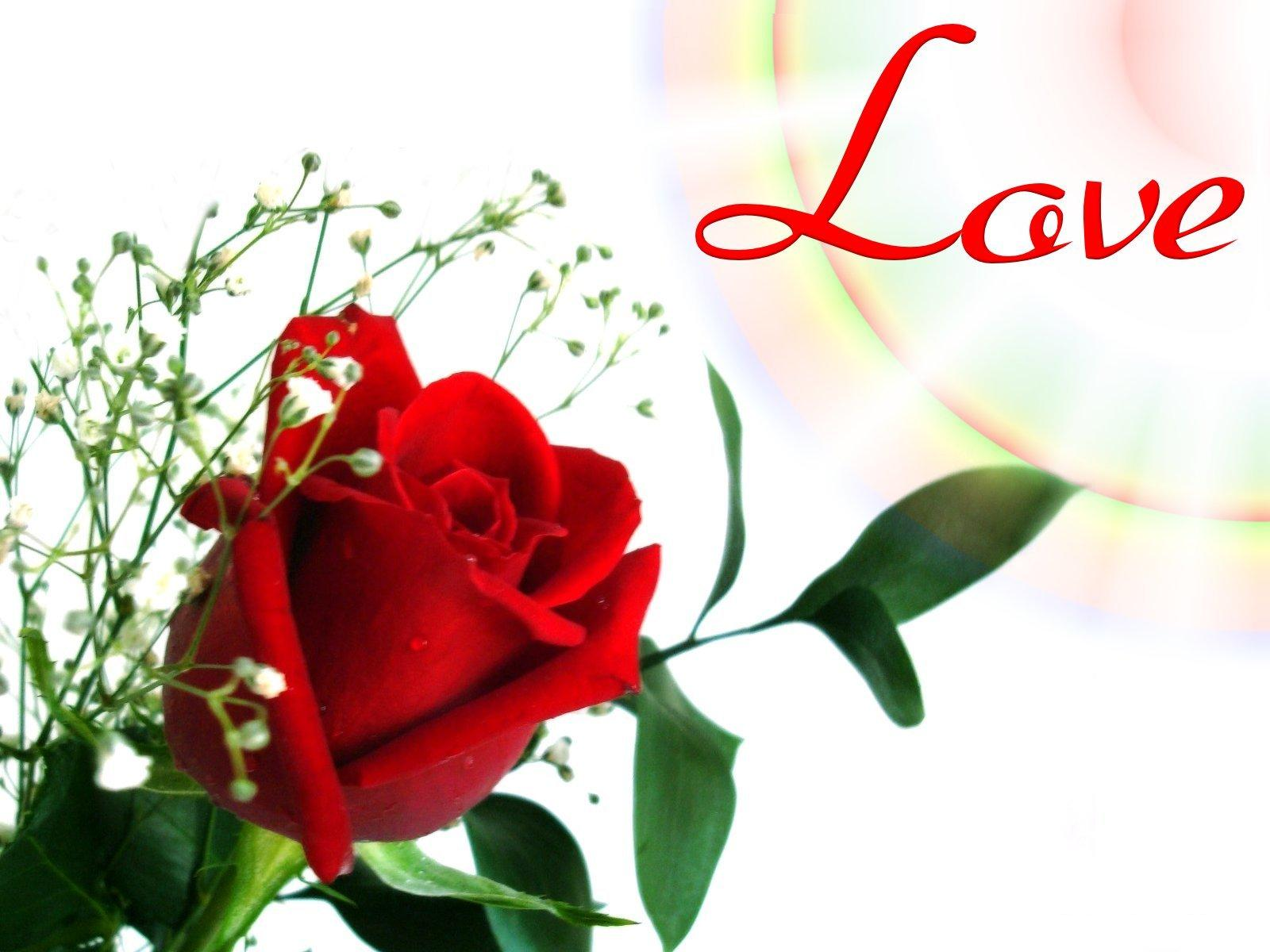 Flowers Love Wallpapers Love Red Rose Flower Wallpaper